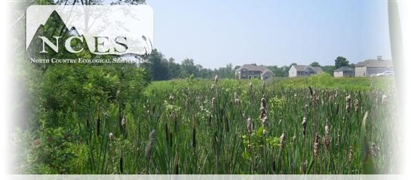 NCES -Wetlands
